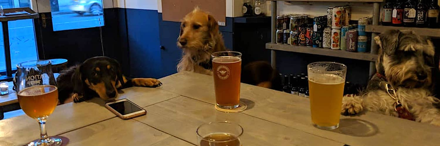 Three dogs drinking beer and checking their phones at Station Hop bar in Levenshulme, Manchester